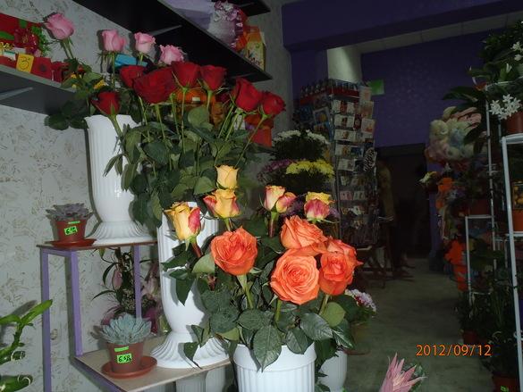 Katrin`s flowers