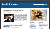 кучета, котки и други домашни любимци