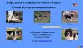 Български Овчарски Кучета - Марек и Марта